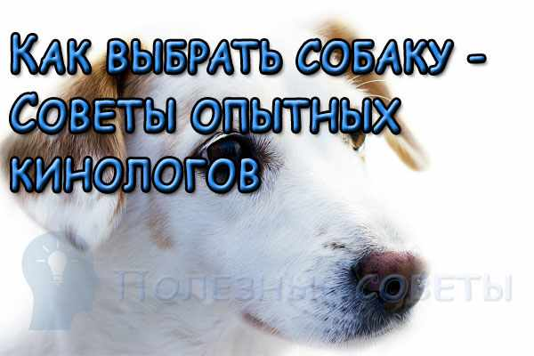 Как выбрать собаку, которая станет вам лучшим другом - Советы опытных  кинологов 315ca7dd57e